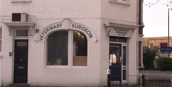Vet surgery video